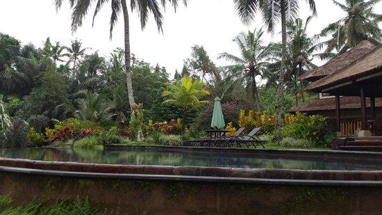 Villa Semana : Stunning pool