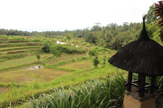 Villa Semana : View from the hotel