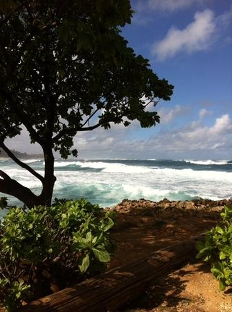 Turtle Bay Beach: isnt this a great view?