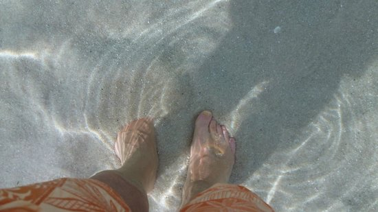 Disney's Beach Club Villas: Feet in the sand!