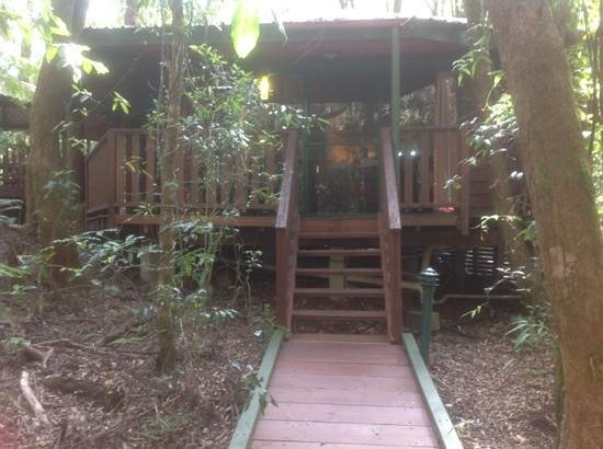 The Mouses House Rainforest Retreat : snow white chalet