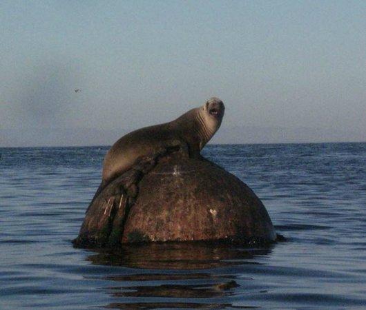 Monterey Oceanside Inn: close to sea life
