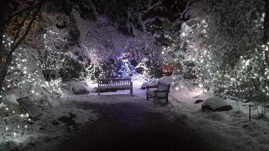 Cincinnati Zoo & Botanical Garden: Cincinnati Zoo Festival of Lights