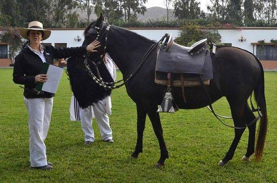 Los Ficus Casa Hacienda: Explaining the breed