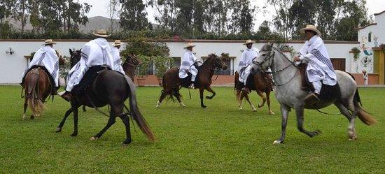 Los Ficus Casa Hacienda: Peruvian Paso performance
