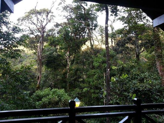 Sutera Sanctuary Lodges: Lotsa greeneries :)
