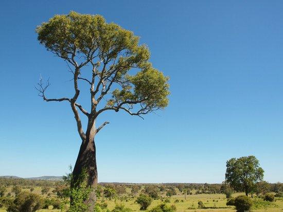 Baralaba, Αυστραλία: Scenery