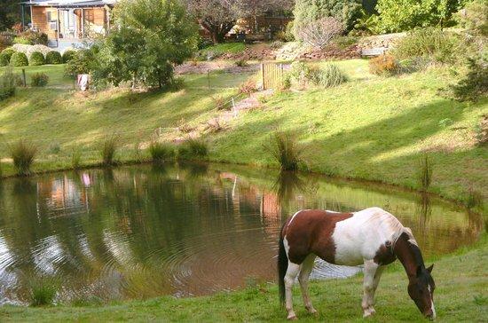 Wilmot, Australia: Annie the horse