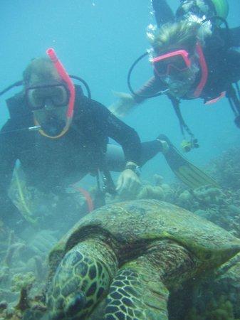 Port Douglas Dive