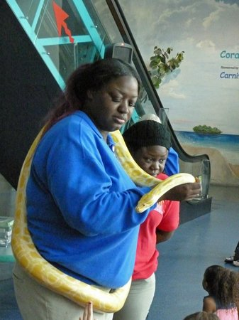 Museum of Discovery and Science: for snakes lovers :)