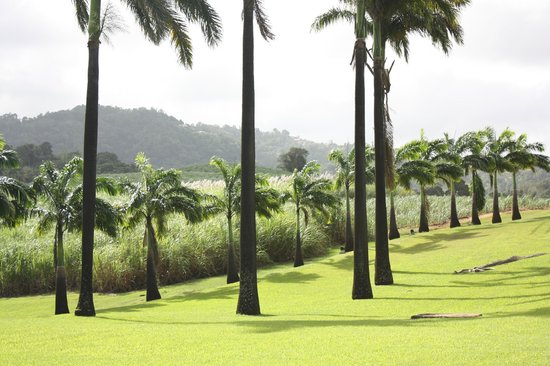 Habitation Clement: des palmiers