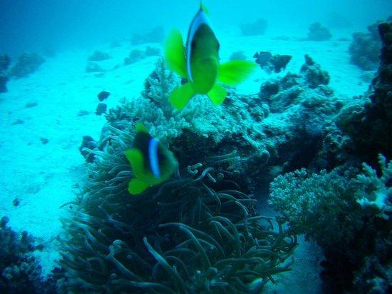 Aquanaut Diving Club : 3