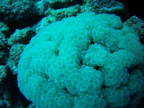 Aquanaut Diving Club : 1