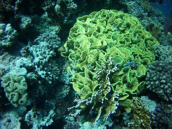 Aquanaut Diving Club : 4