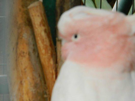 Cocodrilo Park Gran Canaria : Попугаи