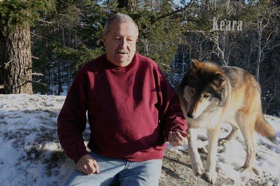 Colorado Wolf and Wildlife Center: Keara