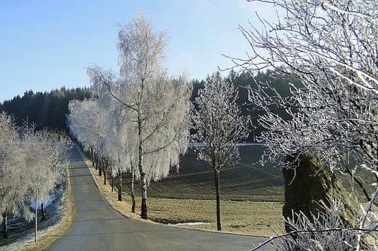 Friedersbach, ออสเตรีย: Raureif im Waldviertel