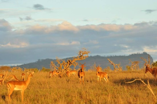Lions Bluff Lodge: Out on Safari