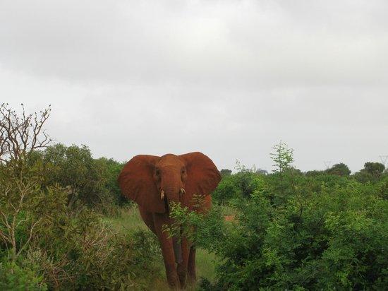 Ombretta Tours & Safaris - Day Tours : tsavo east