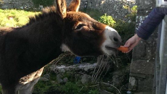 Dublin Tour Company: Cutest donkey ever