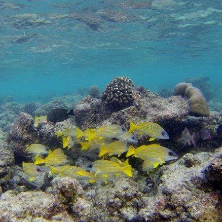 Cocoa Island by COMO: Cute little fish!