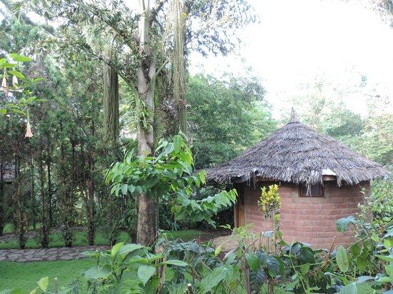 Moyoni Lodge: Parmi les oiseaux