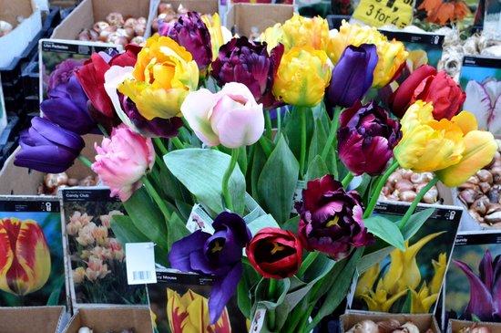 Flower Market / Bloemenmarkt: Sementes e flores