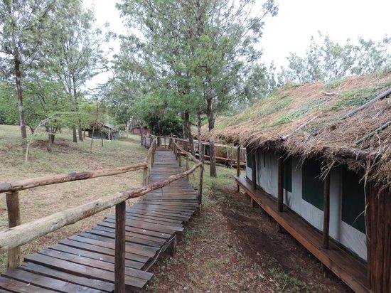 Ngorongoro Forest Tented Lodge: Promenade