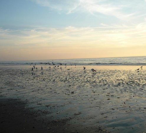 Mercure Deauville Centre: Пляж Довиля