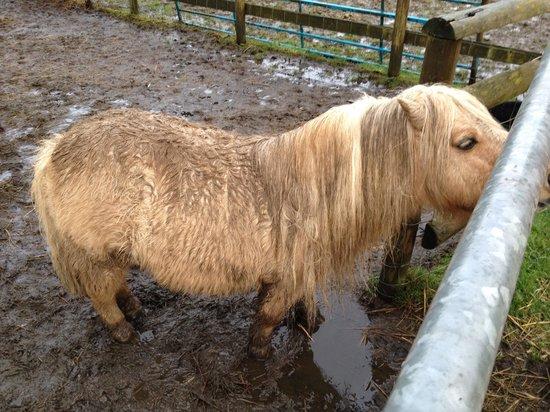 Cefn Mably Farm Park: Cefn mably farm