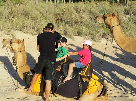 """Ships of the Desert : Lead Camel """"Loading"""""""