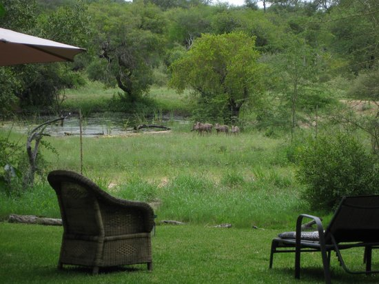 Masodini Private Game Lodge: Aussicht auf's Wasserloch