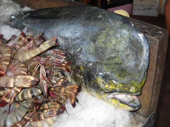 Tibetan Kitchen: view of fish displayed