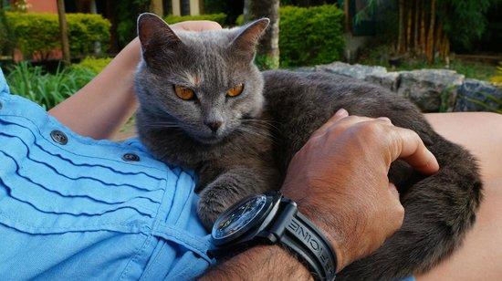 Utropico Guest House: The lovely cat!
