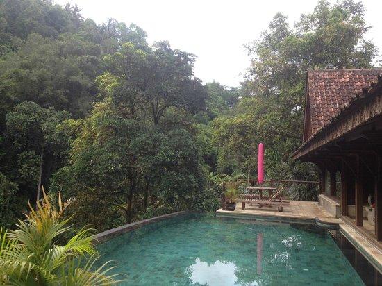 Ayung Resort Ubud : Let's have a swim!