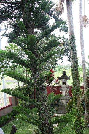 Balam Bali Villa : Extérieur