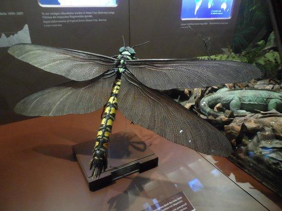 Muséum d'histoire naturelle de Vienne : Naturhistorisches Museum
