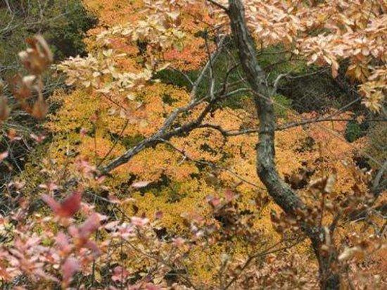 Agatsuma Canyon: 見晴台(小蓬莱)02