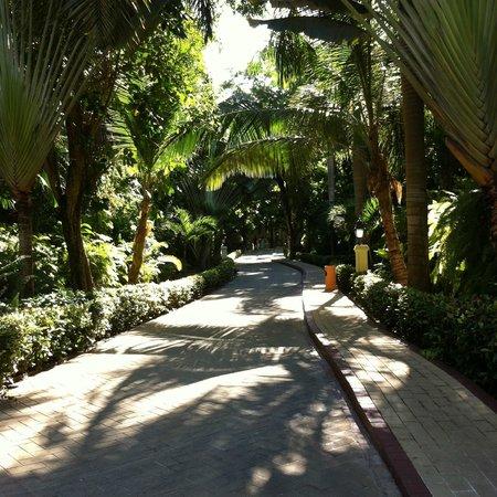 Luxury Bahia Principe Cayo Levantado Don Pablo Collection: Shaded walk to the beach