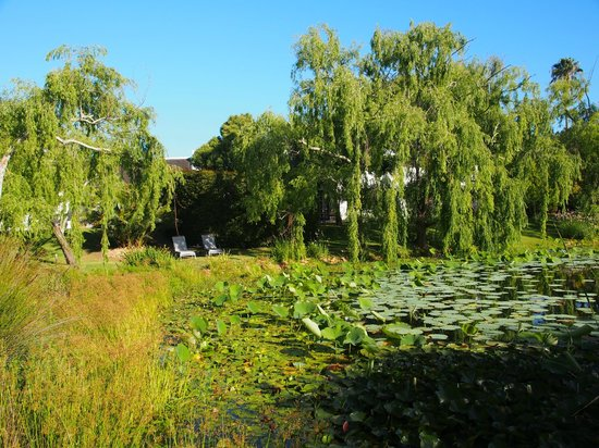 Rothman Manor : Garten