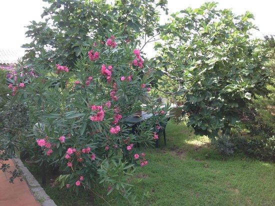 Il giardino foto di residence cala francese la - Giardino francese ...