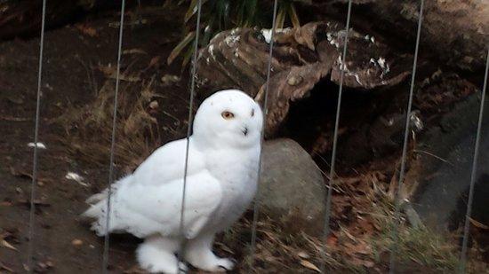 Bronx Zoo : Owls