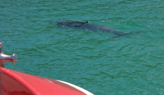 Mack Attack: dolphin off the starboard bow