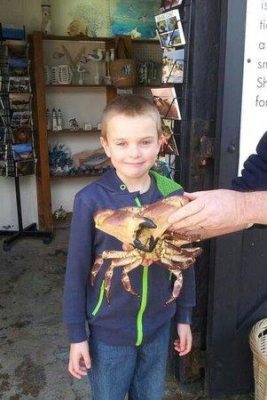 Lyme Regis Marine Aquarium : Aiden with a huge crab!