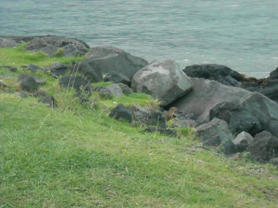 Cafe 100: The view nearby - mongoose playing amongst the rocks