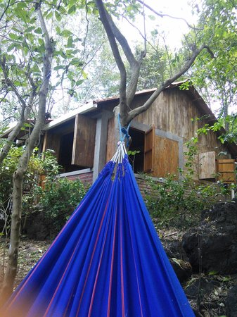 La Via Verde - Organic Farm and B&B : view of our bungalow from the hammock