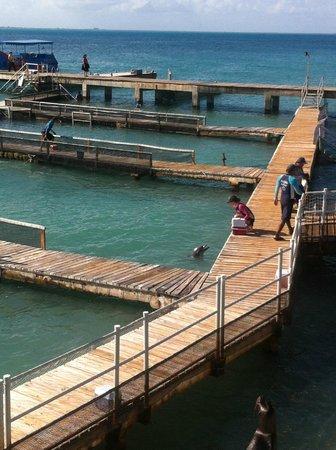 Dolphin Discovery Isla Mujeres: Las piscinas de actividades