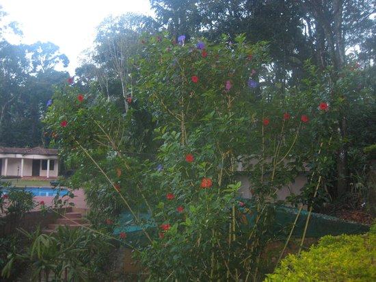 Carmelia Haven: view