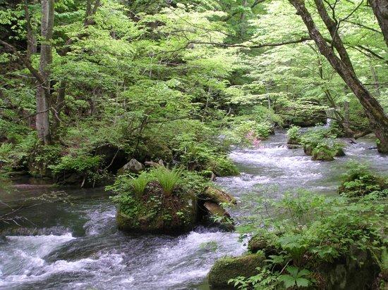 Oirase Stream: 歩道から