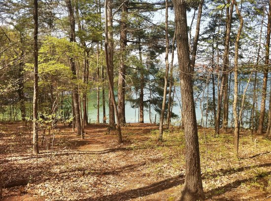 Devils Fork State Park: wooded campsite overlooking the lake